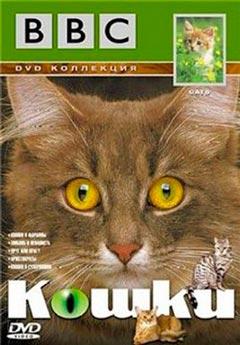 ВВС: Кошки (ВВС: Cats). Часть 3 - Друг или Враг